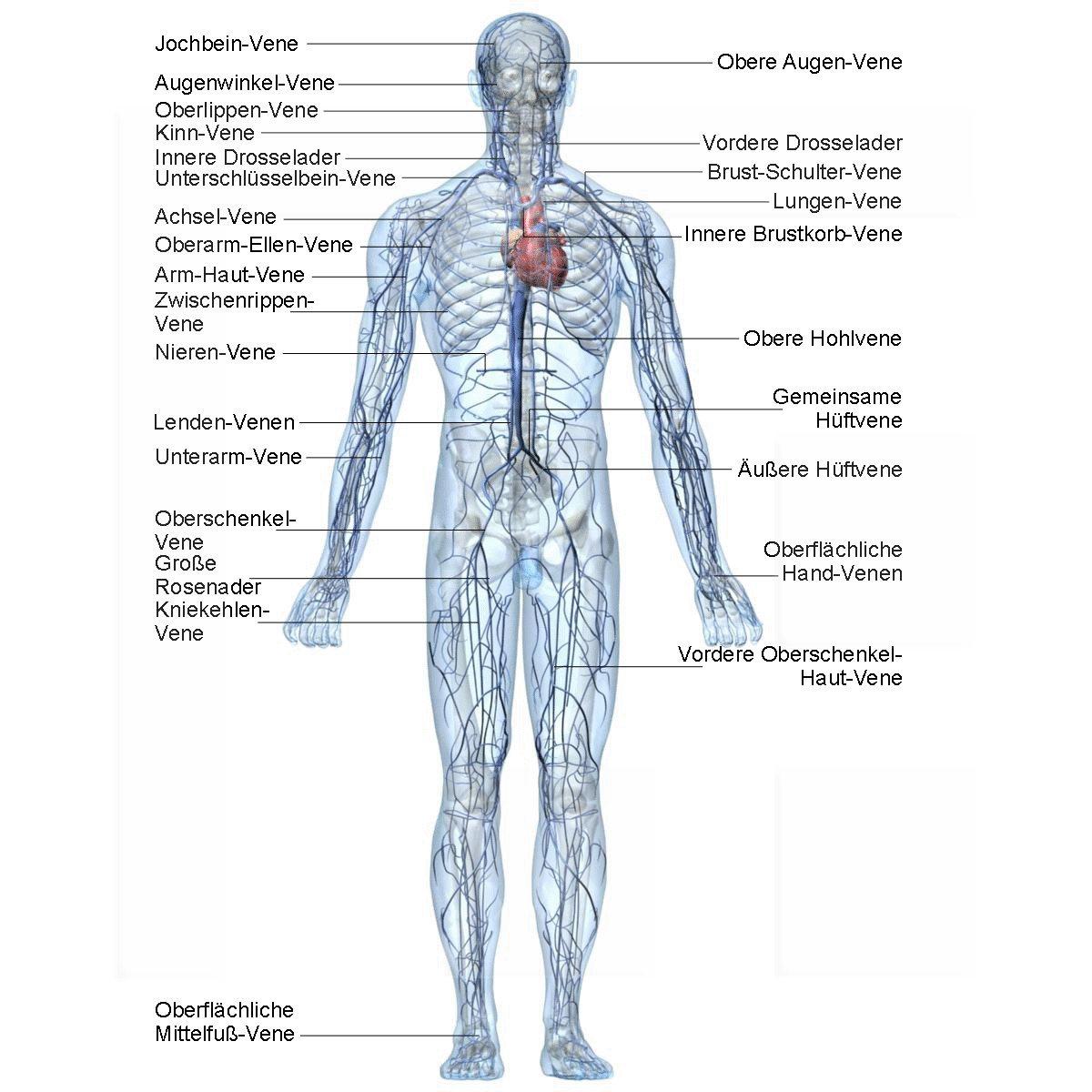 Großzügig Anatomie Der Achsel Galerie - Menschliche Anatomie Bilder ...